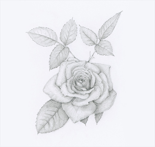 Graphite Rose by Renée Alexander